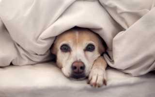 Обезболивающее для собак при онкологии