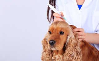 Когда перед прививкой гнать глистов собаке