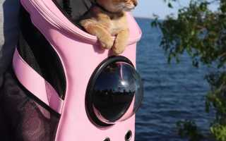 Виды переносок для кошек
