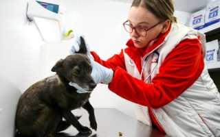 Профилактика чумки у собак