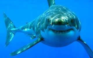 Море без акул