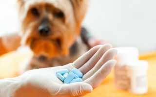 Обезболивающие препараты для собак при болях