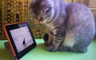Видео для кошки на экране