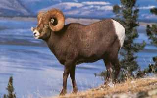 Книга животных яндекс