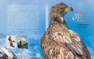 Исчезающие птицы кавказа