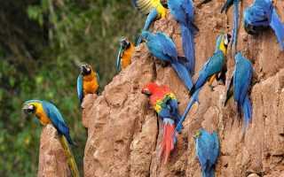Большие попугаи фото цена
