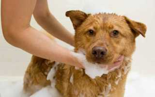 Лекарство от власоедов у собак