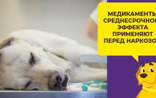Какие лекарства можно дать собаке