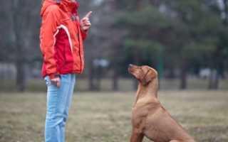 Как нужно дрессировать собаку