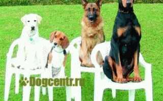 Дрессировка собак инструкция