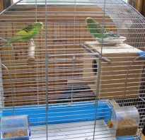 Волнистый попугай гнездо своими руками