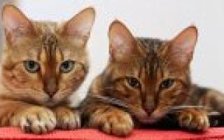 Окраска вискас у кошек