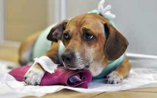 Обезболивающее для собак после операции