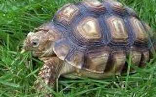 Сообщение о черепахах краткое