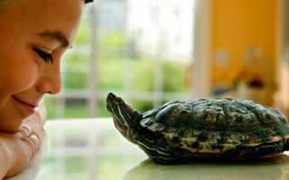 Как можно назвать черепаху красноухую