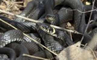 Внешнее строение змеи