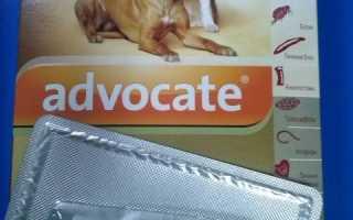 Капли адвокат для собак инструкция