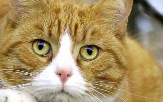 Витамины для кошек в жидком виде