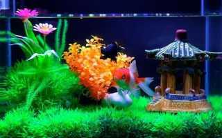 Аквариум для 1 рыбки