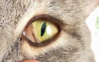 Видно третье веко у кошки