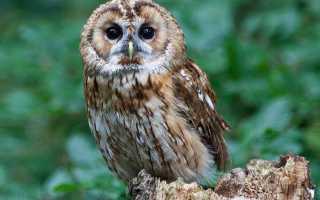 Исчезающие виды животных в крыму