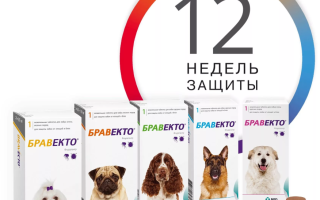 Бравенто лекарство для собак