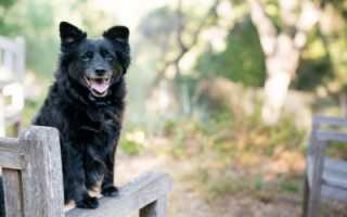 Нервная форма чумы у собак