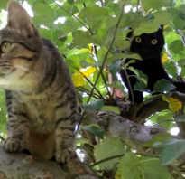 Полосатый окрас кошек
