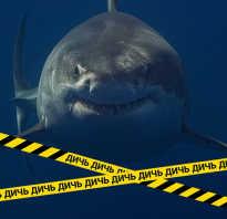 Фотографии белой акулы