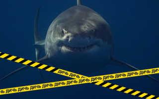 Белая акула фотографии