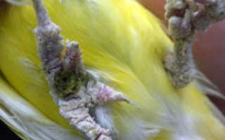 Спрей чистотел для попугаев