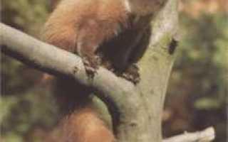 Видео куница жизнь в дикой природе