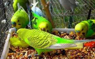 Что можно есть попугаем