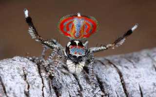 Как выглядит самый страшный паук