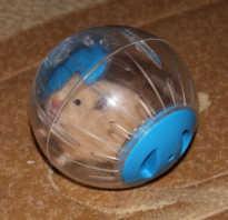 Как сделать шарик для хомяка