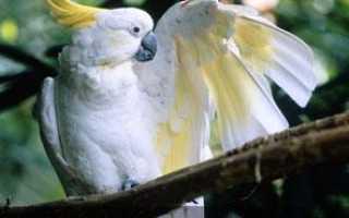 Сколько стоит попугай какаду в москве