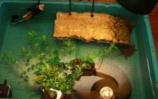 Как сделать сушу для красноухой черепахи