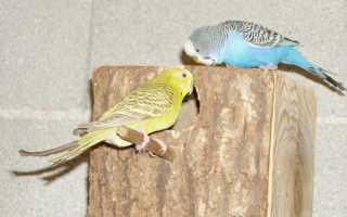 Как сделать гнездо попугаю