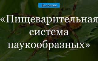 Пищеварительная система паука