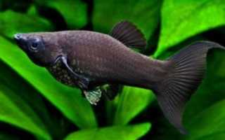 Аквариумные рыбки совместимость в аквариуме