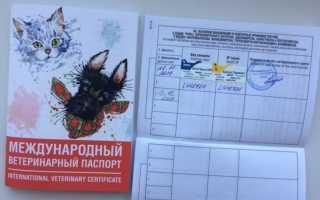 Вид животного в паспорте пример кошка