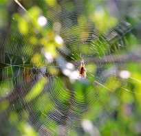 К кому относятся пауки