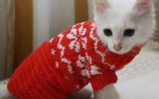 Как связать кофточку для кота спицами
