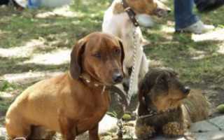 Глистогонные для собак инструкция