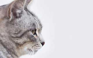 Описать внешний вид кошки