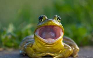 Сколько лягушка может находиться под водой