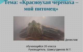 Доклад про черепах 2 класс