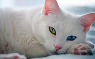 Самые красивые виды кошек