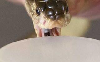 Змеиный яд для кожи