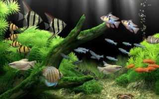 Рыбы которые живут в аквариуме